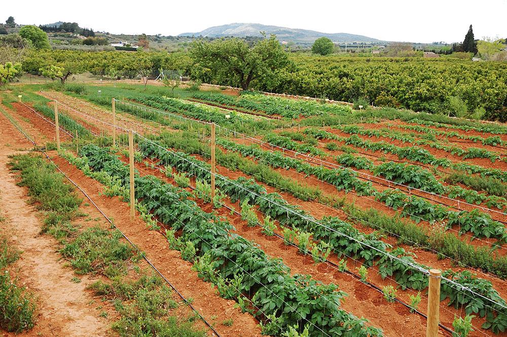 L'Enllaç de l'Ebre inicia activitat en plena efervescència del consum agroecològic i de proximitat